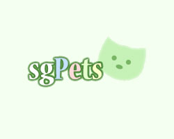 Intelligent Male and Female Capuchin monkeys - Singapore Pets Classifieds | Sg Pets