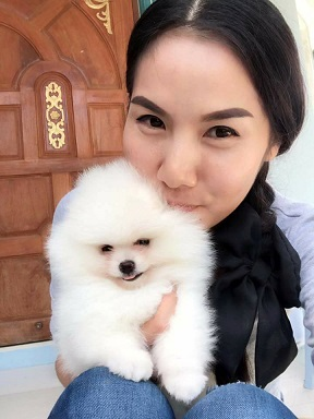 White Pomeranian Puppy For Sale - Singapore Pets Listings | Sg Pets