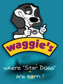 Waggie's Pet Care - Dog Training Singapore by Patrick Wong - Singapore Pets Services | Sg Pets