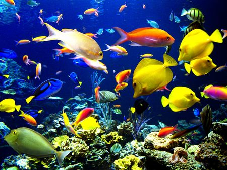 Starter's guide to Marine Fish! | Sg Pets, Singapore Pets Articles